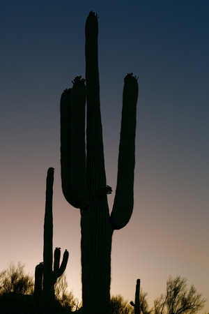 Desert At Sunset 2